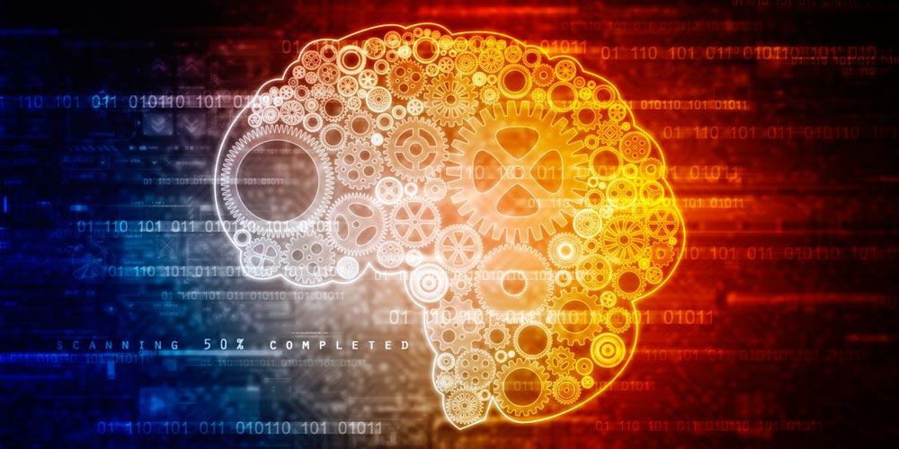 El cerebro en la toma de decisiones